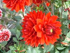 DSCF0574 (P.J. McNair) Tags: flowers honeymoon prettypetals