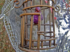 i have no idea why that caged bird does by emdot, on Flickr