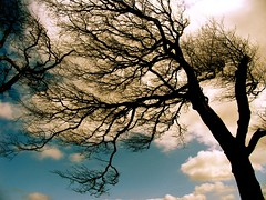 The way The Wind blows (Anima Fotografie) Tags: blue ireland sky dublin tree nature beautiful europe saveme saveme2 gorgeous branches 2006 explore stunning april fractal lovely magical impressive scs babyblue marvellous verycool steiner62 scoreme44 challengeyouwinner abigfave challeneyouwinner explorethis poetrypicturesinternational indeedweallare