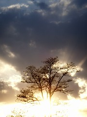Burning Tree (FOTOGRAFIA.Nelo.Esteves) Tags: sunset sky usa tree beautiful clouds wow wonderful us newjersey amazing cool fantastic unitedstates gorgeous magic awesome great nj 2006 rays monmouthcounty sunrays bayshore heavenly konicaminolta unionbeach views200 dimagex1 neloesteves zip07735 fcsetsrises
