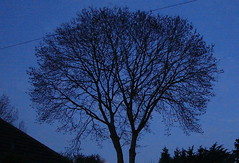 Dawn Chorus... (Dave - aka Emptybelly) Tags: blue shadow silhouette sunrise ilovenature dawn empty sony explore belly sonydscs40 kiss2 dscs40 dgr kiss3 kiss1 kiss4 lovephotography emptybelly gtaggroup goddaym1 kiss5 obsessiveflickrites amillionphotos