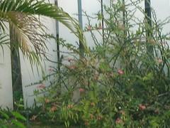 DSCN0533 (NOFF) Tags: spring break barbados gnd