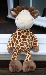 Day 4: Giraffe (EDGEimageADay) Tags: 2 digital toy photo soft day image mark sony diary may cybershot 2006 plush 2nd every edge cuddly imaging giraffe r1 philpott