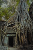 The temporary nature of things (Wen Nag (aliasgrace)) Tags: tree 1025fav wow asia cambodia southeastasia fig roots ficus portal angkor taprohm