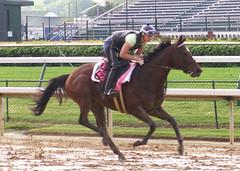 Balance (horsestohorsepower) Tags: horseracing oaks derby churchilldowns kyderby dawnatthedowns kyoaks morningworks
