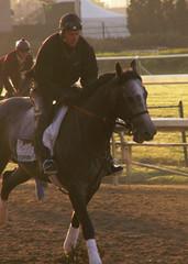 Steppenwolfer (horsestohorsepower) Tags: horseracing oaks derby churchilldowns kyderby dawnatthedowns kyoaks morningworks