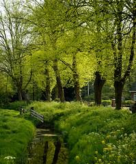 Spring in Holland (nils ) Tags: trees green grass spring bomen gras springgreen slootje 16331 lentegroen