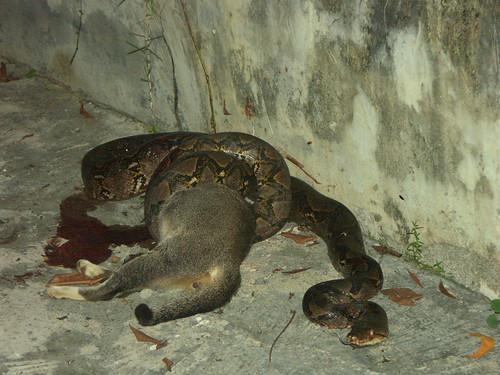 Cat 0, Snake 1
