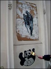 streetart pasteup art dresden panda mo buff tetra taube neustadt kleben gerippe säubern pinkelcrew