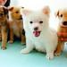 子犬:puppies