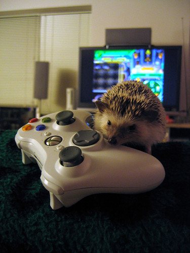Hedgehog with a controller