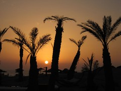 Sunset (freddie2310) Tags: sunset screensaver agadir morocco palmtree maroc palmier coucherdesoleil fcsetsrises