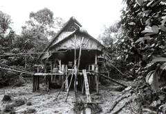 Dom dżungli Mentawai (Indonezja)