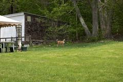 """jungledog <a style=""""margin-left:10px; font-size:0.8em;"""" href=""""http://www.flickr.com/photos/25671950@N00/150479972/"""" target=""""_blank"""">@flickr</a>"""