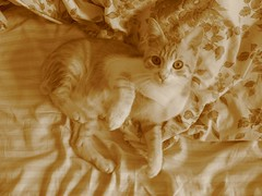 (Marchnwe) Tags: cats sepia cat bed