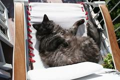 fat black cat (valefranz) Tags: sleeping pet cats pets animal animals cat sleep fat felino felini gatto nero gatti micio mici grasso stupido tigrato animalidacompagnia