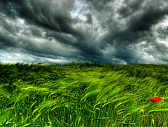 captured emotion (niklens) Tags: storm flower nature topf25 clouds landscape austria gutentag quality naturesfinest nikond200 gtaggroup goddaym1 nikonstunninggallery anawesomeshot frhwofavs damniwishidtakenthat photocontesttnc08 atqueartificia gettyimagessalq1