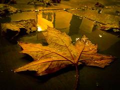 Memores of the past...remember the fall (Dragonslayer8888) Tags: fall autumn season december leaf canadian sad sadness nostalgic memories past blur bokeh dreams night outdoor cold warm macro
