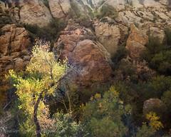 Fall Color (Gallopingphotog) Tags: apachetrail arizona
