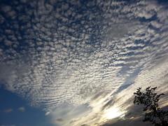 tramonto (presteza777) Tags: trees sunset sky nature beautiful clouds stpetersburg evening tramonto nuvole russia nubes nuages puestadelsol закат coucherdusoleil небо город облака naturalezza