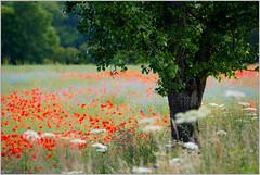 Les paysages de Puisaye-Forterre (Office de Tourisme Portes de Puisaye-Forterre) Tags: paysage bourgogne yonne nivre puisaye puisayeforterre bourgognebuissonire