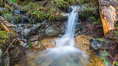 A Stream (Matthew J Lewis) Tags: plants water washington moss log rocks stream ferns