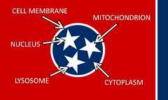 Tennessee Biological (thisisbossi) Tags: usa unitedstates tn state tennessee flag flags biology cells