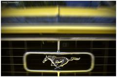 Mustang (Israel Fdez) Tags: horse car caballo israel nikon valladolid coche parrilla motor mustang insignia clasico campogrande deportivo vehiculo sportcar cap galope galopar enginer aceraderecoletos israpicture nikond7000 israelfernandez