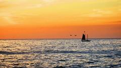 Sailing (talithanieuwenhuizen) Tags: sunset summer beach sailing boat sky horizon ocean