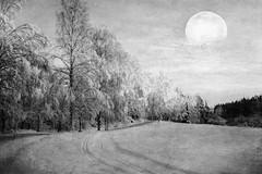 I love winter. (BirgittaSjostedt) Tags: winter landscape snow tree track road field cold ice scene outdoor texture paint moon birgittasjostedt magicunicornverybest ie mono monochrome