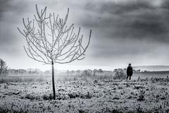 Winter landscape (Frank Lammel) Tags: blackandwhite blue cold germany hessen ice landscape schwarzweiss winter