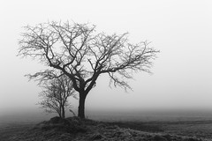 Ghosts from the Past (desomnis) Tags: monochrome blackwhite blackandwhite trees tree fog mist misty foggy haze grey bw landscape landscapephotography landschaft landscapes silhouette silhouettes desomnis canon6d 35mm sigma35mm mühlviertel austria österreich upperaustria minimalistic minimal minimalist minimalstic foggymood foggyatmosphere heavyfog