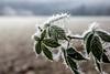 Roigheim Dez16 (d.pub5) Tags: winter eis ice kalt kälte freeze frost eiskristalle snow schnee nebel fog