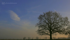 misty morning 10.12.2016 -p4d- 031 (photos4dreams) Tags: mistymorning10122016p4d winter photos4dreams p4d photos4dreamz photo rauhreif frosty rime hoarfrost landschaft landscape