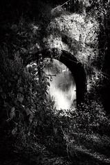 gate to unknown (bishakha.chakraborty) Tags: door abandoned history wild wildernes forest nostalgia indianphotography india mumbai bushes entrance lock barred naturallighting lightandshadow
