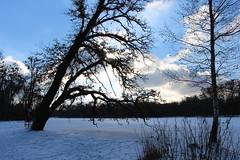 freitag in nymphenburg (ingejahn) Tags: nymphenburg münchen winter park schnee kalt