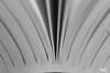 16 - Open your books (Fippo Gomes) Tags: canon eos100d sl1 macro macromondays papel paper