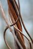 Strangled (PaulHoo) Tags: nikon d700 macro detail closeup abstract dof 2017 botshol holland netherlands strangled plant