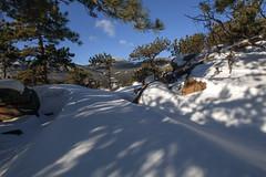 Wind Tunnels (Jeff Mitton) Tags: snow wind rockymountainnationalpark rockymountains ponderosapine landscape mountain winter earthnaturelife wondersofnature