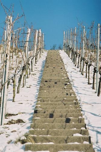 Winterliche Weinberg-Symmetrie