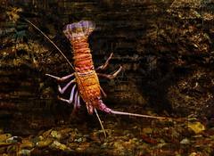 On the Prowl (bethrosengard) Tags: bethrosengard photomanipulation digitallyenhanced photoart digitalmagic digitalart