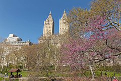 Central Park - New York City (USA) (Meteorry) Tags: park nyc morning flowers usa newyork america fleurs spring apartments purple unitedstates blossom centralpark manhattan unitedstatesofamerica april upperwestside twintowers empirestate parc bigapple sanremo uws matin 2015 meteorry westcentralpark newyorkccity printpemps