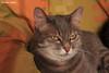 Relax (PurpleTita) Tags: italy cats pets nature cat canon relax torino italia natura riposo piemonte turin gatto piedmont gatti animali vallidilanzo eos1100d