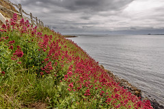 The Flaming Seascape (stephentucker558) Tags: ocean red sea cliff seascape castle cloudscape