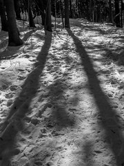 Long shadows on a forest path (AR_the old guy) Tags: trees winter bw snow monochrome forest raw shadows path trunks toned microlandscape mcmichaelcanadianartcollection p2285053