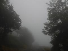Magica nebbia lungo la strada per Bossolasco (Eca photos) Tags: fog alberi wow three nebbia paesaggio figo poca foschia surreale trasparenza visibilità sembrainverno