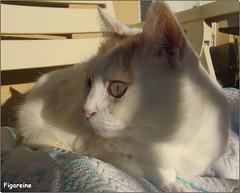Enfin le soleil est revenu et Mouna peut profiter du soleil et de ses 17° sur la terrasse  ...Alors que ce matin au même endroit il faisait 0° (Figareine- Michelle) Tags: mouna chat bestofcats catmoments vg~catsgallery coth5