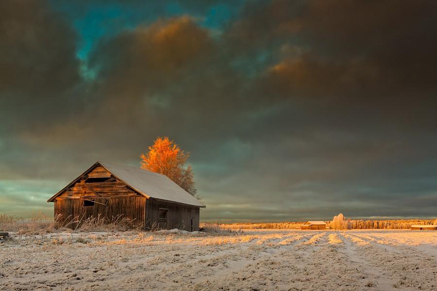 Golden Sunrise On The Winter Fields