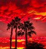The Trio (http://fineartamerica.com/profiles/robert-bales.ht) Tags: arizona foothills forupload haybales land palmtree people photo places plants projects states sunsetorsunrise sunrise sunset street southwest red yellow landscape silhouette clouds desert twilight sunrays orange nature beautiful colorful bright scenic stunning mountain morning sensational spectacular cirrus southwestern horizon sonoran panoramic awesome magnificent peaceful surreal sublime magical spiritual inspiring inspirational tranquil sunlight wallpaper yuma robertbales