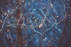 In the woods (Chloé +++) Tags: bois forêt woods forest leaf leaves feuille feuilles winter hiver blue bleu orange magique magic trees canon os400d profondeur de champs france occitanie proxi bokeh